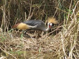uganda visit and return to the rains u2013 sunnyhelenintanzania
