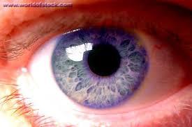 purple eye color rare eye color violet eyes rare impossible common violet blue