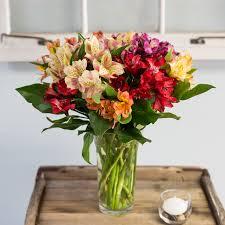 Alstroemeria Mixed Alstroemeria Bouquet In Cambridge Ma Coady Florist
