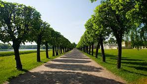 tree care terra gardens