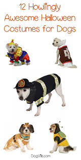 Halloween Costume Ideas For Pets 100 Ideas For Dog Halloween Costumes 235 Best Pet Halloween