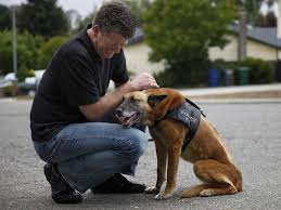belgian malinois in movies donors pitch in for injured police dog rico the press democrat