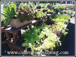 gardening and wellbeing archives cultivated wellbeing