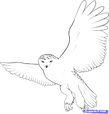 how to draw a snowy owl step by step birds animals free online