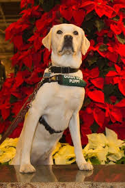 Leader Dogs For The Blind Rochester Michigan 17 Best Our Guides U0026 Friends Images On Pinterest Guide Dog