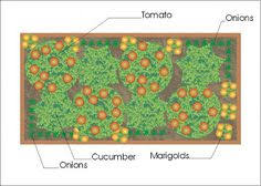 companion planting layout garden ideas pinterest planting