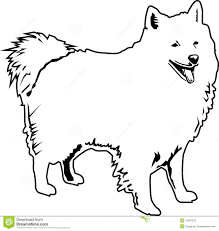 american eskimo dog black american eskimo black and white stock photos image 15837973