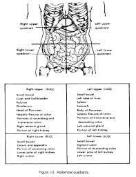 Colon Worksheet Picture Of Abdominal Quadrants Quiz Worksheet The Abdominal