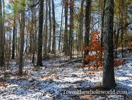 Alabama forest images Visiting birmingham jpg