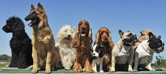 lifespan of a bluetick coonhound help your dog live longer