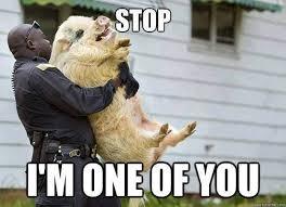Animal Meme - animal memes i m one of you funny memes