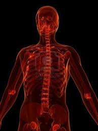 A Picture Of The Human Anatomy Animal Instincts Of The Human Body A Psychological And Skeletal