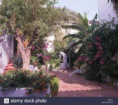 pink bougainvillea in spanish villa courtyard with small trees and