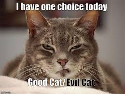 Good Cat Meme - choices imgflip