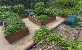 why you should plant a raised bed vegetable garden care2 healthy