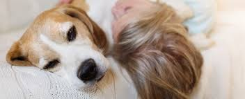 What Causes Dogs To Go Blind How To Care For Blind And Deaf Senior Dogs Petplace