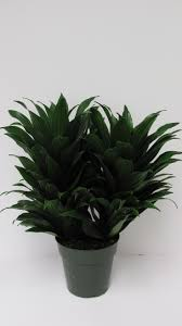 Best Indoor Plants Low Light by 13 Best Best Purifying Plants Images On Pinterest Indoor