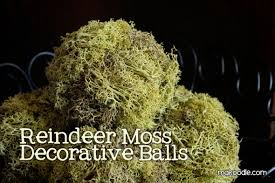 How To Make Decorative Balls Reindeer Moss Decorative Balls Makoodle