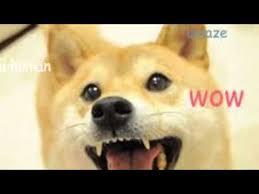 Doge Original Meme - doge wow original video youtube