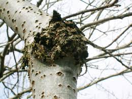 an index of common tree diseases in the united states