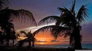 Palm Tree Wallpaper Sunset Palm Trees Wallpaper Wallpapersafari