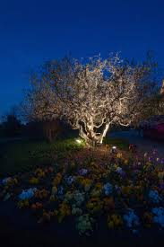 Moonlighting Landscape Lighting Landscape Lighting Nashville Tn And Outdoor Perspectives