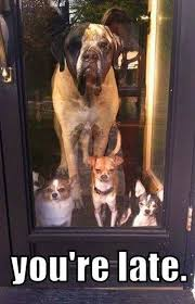 Welcome Home Meme - welcome home party mis canhijos pinterest animal dog and doggies
