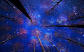 27 canopy hd wallpapers backgrounds wallpaper abyss