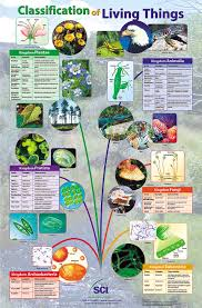 classification of living things poster laminated