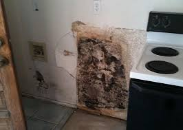 kitchen black mold in kitchen on kitchen inside cabinets ideas