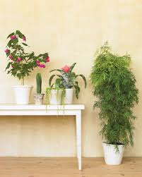Common Tropical House Plants - houseplants for any kind of light martha stewart