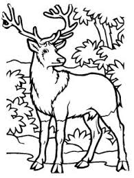 white tail deer coloring embroidery patterns