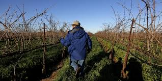 wages rise on california farms americans still don u0027t want the job
