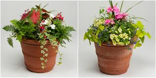 Plants For Patio by Order Your Blooming Spring Plants For Mother U0027s Day