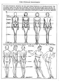 Anatomy Difference Between Male And Female Female Anatomy Drawing Reference Guide Drawin