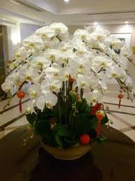 orchid arrangements stunning orchid arrangement in lobby picture of imperial hotel