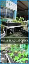 28 best aquaponics images on pinterest hydroponics aquaponics
