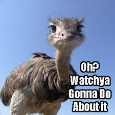 Ostrich Meme - elephant has had enough of ostrich s mockery mandatory