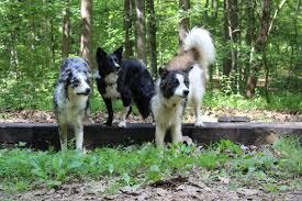 dogs u2013 high impact k9s