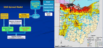 emerald ash borer map modeling the risk of eab invasive species forest disturbance