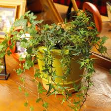 poisonous plants in the home