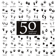 set of animal and bird trails with name royalty free cliparts