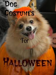 Dogs Halloween Costumes Dogs Halloween Costumes Fraser Valley Gifts Souvenirs