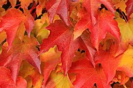 why do leaves change color learning resources