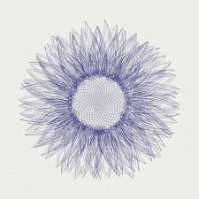 graphic line sketch of a sunflower vector clipart image 16886