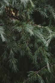 100 wadsworth ohio christmas tree farm inspiration the