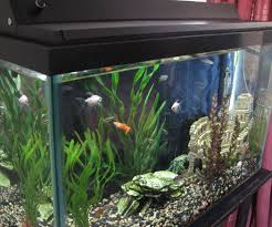 24 aquarium light bulb top 54 supreme black light fish tank 24 inch aquarium bulb lights