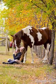 equine home decor 406 best horses u003d love images on pinterest horses horse pictures
