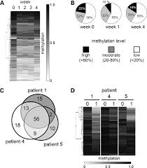 azacytidine causes complex dna methylation responses in myeloid