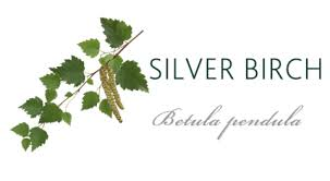 silver birch meaning tree symbolism the present tree